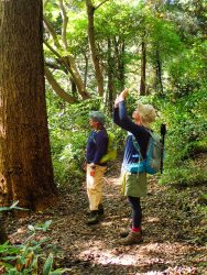鎌倉の森の歩き方