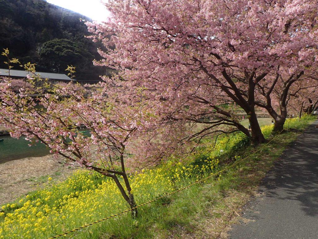 春の南伊豆イベントに参加。