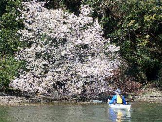 春分の海、桜を愛でる。