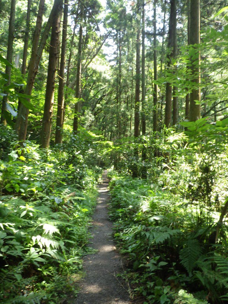 9月23日(秋分の日)森戸川源流散策ツアー