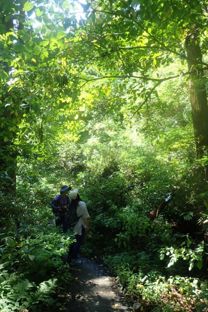 秋分の日の森戸川源流散策ツアー