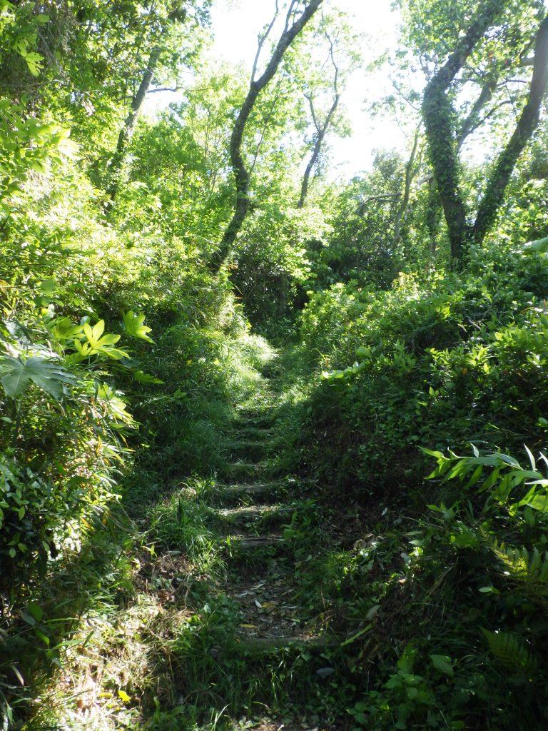 11月11日はやま三ケ岡緑地散策ツアー